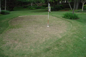 Natural putting green